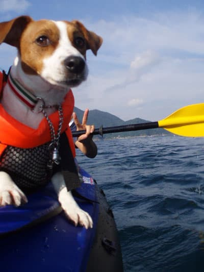 Dog Inflatable Boat