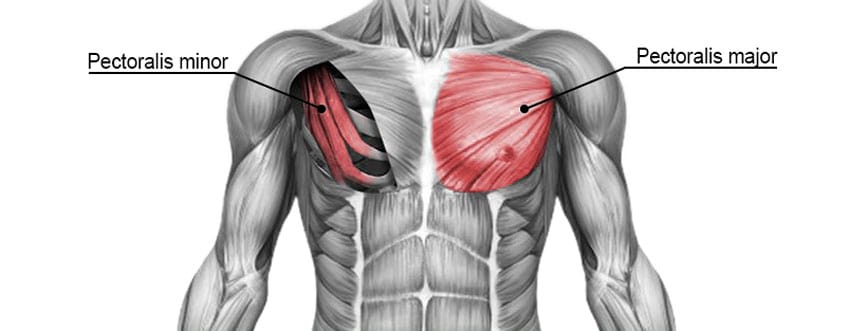 Kayaking Muscles Chest